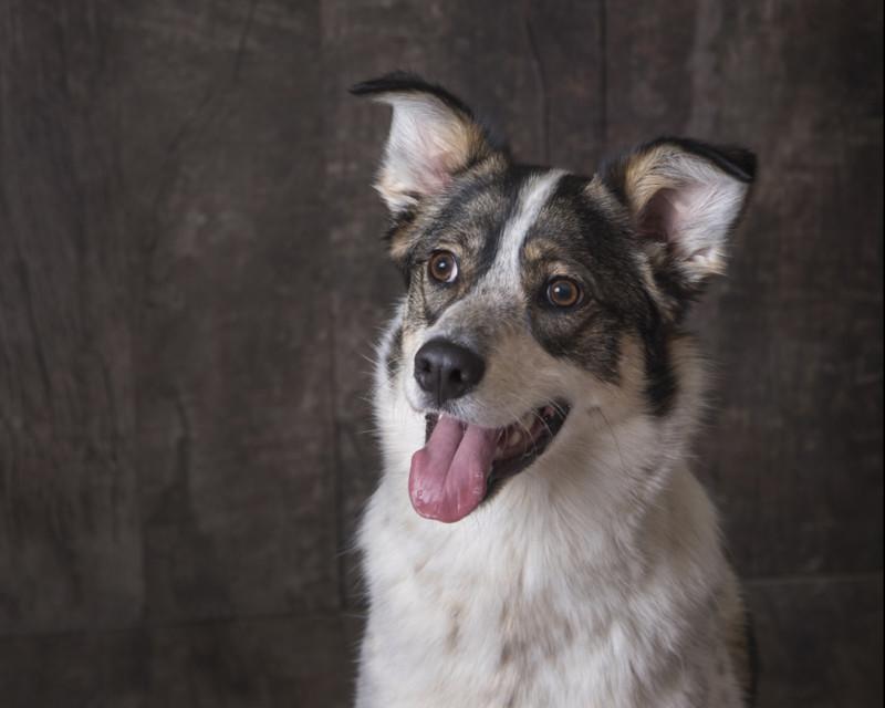 Pet Photographer in Cambridge Ontario